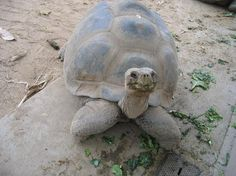 San Diego Zoo: Turtle.he looks happy