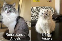 Stupid Funny Memes, Funny Relatable Memes, Haha Funny, Funny Posts, Hilarious, Lol, Funny Stuff, Memes Humor, Animal Memes