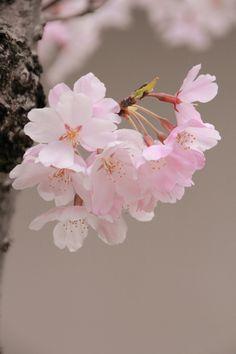 blooms - mizuk@