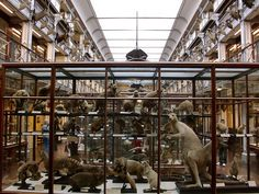 Dublin Natural History Museum. OK, yes, they do call it the Dead Zoo -- doesn't that make it MORE appealing, in a way?