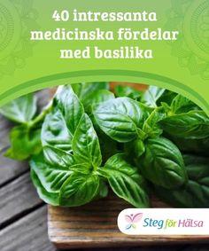40 intressanta medicinska fördelar med basilika  Basilika används mest inom matlagning, men det har också medicinska fördelar. Lär dig mer om dem i den här artikeln. Diabetes, Spinach, Household, Remedies, Vegetables, Tips, Nature, Advice, Home Remedies