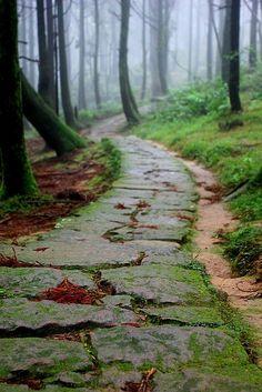 #Damp Pathway