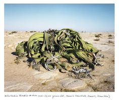 rachel sussman the oldest living things on earth