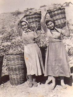 Grape harvest time in Greece, vintage photo when values mattered - Ελλάδα, τρυγώντας το αμπέλι Retro Images, Vintage Pictures, Old Pictures, Old Photos, Malta History, Greek History, Greece Photography, History Of Photography, Films Western