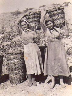 Grape harvest time in Greece, vintage photo when values mattered - Ελλάδα, τρυγώντας το αμπέλι