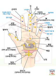 Pin by Yoon Hee Kang on hand acu. Acupressure, Acupuncture, Yoga Fitness, Health Fitness, Cat Exercise, Medical Anatomy, Muscle Anatomy, Alternative Therapies, Korean Language