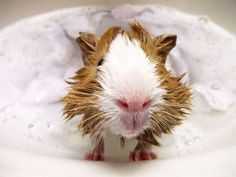 Taking a Bath To Your Pet Will Actually Make You Happier - ViralDire