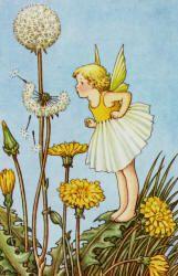 """A Bunch of Wild Flowers"" (1933), illustrated by Ida Rentoul Outhwaite (Spirit of the Ages)"
