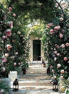 Arbor in France - Pierre de Ronsard Roses. Devine.