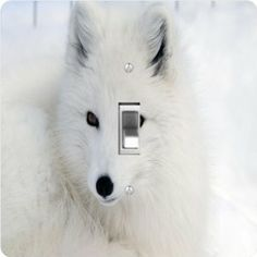 """Rikki KnightTM White Arctic Fox Close-Up - Single Toggle Light Switch Cover by Rikki Knight. $13.99. Glossy Finish. For use on Walls (screws not included). 5""""x 5""""x 0.18"""". Masonite Hardboard Material. Washable. The White Arctic Fox Close-Up single toggle light switch cover is made of commercial vibrant quality masonite Hardboard that is cut into 5"""" Square with 1'8"""" thick material. The Beautiful Art Photo Reproduction is printed directly into the switch plate and not decou..."""