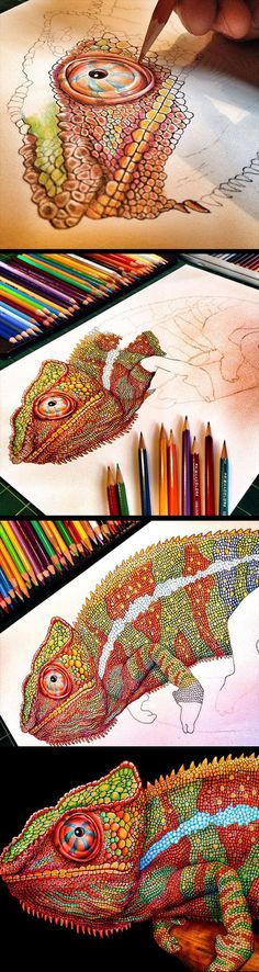 The Most Detailed Drawing Of A Chameleon and Iguana.