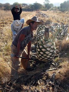 Mezcal ~ the source