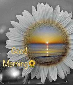 Morning Qoutes, Good Morning Image Quotes, Good Morning Beautiful Quotes, Morning Quotes Images, Good Morning Picture, Good Morning Gif, Good Morning Flowers, Good Morning Greetings, Morning Pictures
