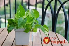 The top 15 plants for removing indoor toxins according to NASA Nasa, Inside Plants, Cool Plants, Poisonous Plants, Medicinal Plants, Indoor Flowers, Indoor Plants, Air Cleaning Plants, Household Plants