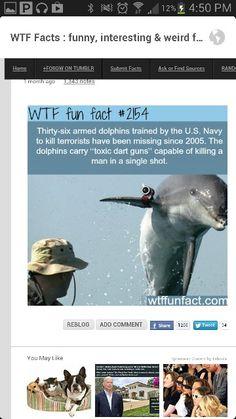 Crazy dolphins