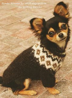 A easy written pattern to make your own dog sweater with fair isle look. The sweater is meant for little dogs, so for example a chihuahua or a dog thats a little bigger. Love Knitting, Knitting Kits, Knitting Patterns, Pet Sweaters, Knit Dog Sweater, Knitted Dog Sweater Pattern, Little Dogs, Dog Jumpers, Dog Cat