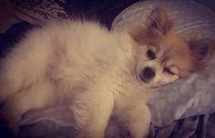 """Paint me like one of your French girls"" #instadoggiegram #instadog #dogsofinstgram #instadoggy #instagram #mommydee #losangeles #california #vibes #love #dogslovers #instajourney #trollmode #lazymode #eat #petsmart #pet #love #photography #instafriends #mom #treats #coco #dogworld #3doggiegram #cute #puppiesofinstagram  #puppylove http://tipsrazzi.com/ipost/1526457045527342434/?code=BUvEJhrjK1i"