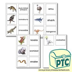 Australian Animal Themed Resources - Primary Treasure Chest Teaching Activities, Teaching Resources, Teaching Ideas, Australian Animals, Matching Cards, Role Play, Treasure Chest, High Quality Images, Crafts For Kids