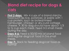 Bland Food For Sick Cats