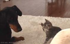 彼女にフラれたから猫GIFあげて忘れる。 : 〓 ねこメモ 〓