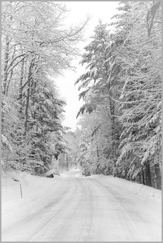 Road in the snowy forest (no location given)