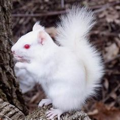 #squirrel albino ~ beautiful & yet a freaky too. I do wish this squirrel a long happy life....