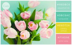 Colour palette - Crisp turquoise hues with bright yellow and bubblegum pink Spring Color Palette, Colour Pallette, Spring Colors, Colour Schemes, Color Combinations, Pink Tulips, Colour Board, Site Internet, Color Blending