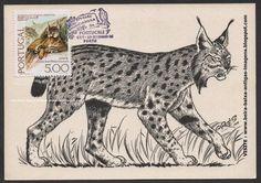 Postal máximo LINCE IBÉRICO ano 1976 em postal do ano 1959 - Espécie animal, ainda existente na época na SERRA DA MALCATA - PENAMACOR / BEIRA BAIXA - PORTUGAL