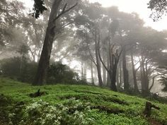 Hills of San Francisco in Morning Fog - [OC] [4032x3024] : EarthPorn