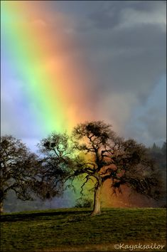 Rainbow Oak~ large oak trees on the farm, also dads oak tree at cemetary and the calm after the storm.Gods Promise I just LOVE all the colors in nature. We are able to see all this beauty on Earth. Can you just imagine how incredible heaven will be! Beautiful Sky, Beautiful World, Beautiful Places, Beautiful Pictures, Love Rainbow, Over The Rainbow, Rainbow Colors, Rainbow Promise, Rainbow Heart