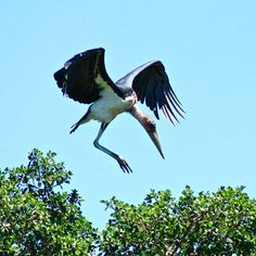 Adding to the rich biodiversity of mammal life, the Kruger National Park is a paradise for birders, though none of the species are endemic to the area. Kruger National Park, National Parks, Button Quail, Private Games, Game Reserve, African Safari, Bird Species, Bird Watching, Mammals