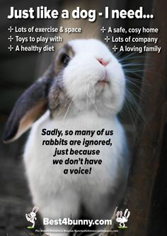 Just like a dog - a rabbit needs. Lots of exercise & space Toys to play with A healthy diet A safe, cosy home Lots of company A loving family It's so sad that so many people fail to know what rabbits need to live a happy life, yet so many will know exac Funny Bunnies, Baby Bunnies, Cute Bunny, Bunny Bunny, Lionhead Bunnies, Bunny Fufu, Pet Bunny Rabbits, Lionhead Rabbit, Bunny Room