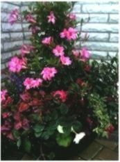 Definition Pbeginners Gardening Beginners Singapore Courses