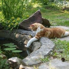 Cat Aesthetic, Nature Aesthetic, Pretty Cats, Cute Cats, Funny Cats, Cottage In The Woods, Dream Life, Aesthetic Pictures, Corgi