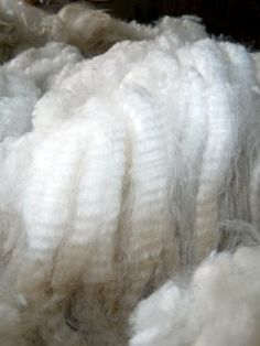 raw alpaca fleece, can you see why I love it!