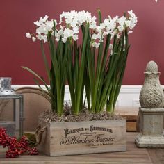 Paperwhites in a vintage wooden wine crate from Longfield Gardens make a great gift