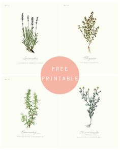 Free Printable: BOTANICAL PRINTS