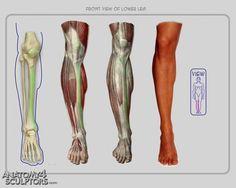 https://www.anatomy4sculptors.com/