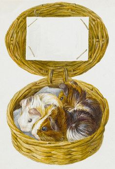 Beatrix Potter. You have no idea how I love guinea pigs.