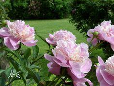 Riesige Blüten...