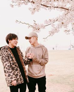 Jackbam cherry blossoms