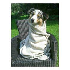 Eef my model dog  #model #modeling #eeftheaustralianshepherd #georgeousdress #fun #funday #vacationisdoingwhatwelove