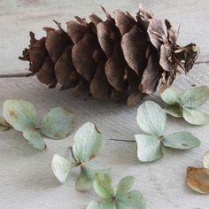 Pine Cones #essenceandorigin #autumn #pines #forage #hydrangea #essence #origin #candles