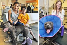 Advanced Veterinary Procedure Saves Beloved Dog's Legs at ASPCA Animal Hospital   ASPCA