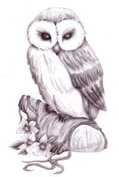 Image detail for -owl pencil sketch by natzs101 traditional art drawings animals 2010 ...