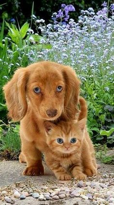 Adorable - Unlikely friendships puppy and kitten