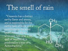 The science behind the smell of rain. I knew it! I get looked at funny every once in a while when I say it smells like it's gonna rain. Let me introduce you to Science, ladies and gentlemen :) Earth Science, Science And Nature, Brain Science, Teaching Science, Life Science, The More You Know, Good To Know, Science Facts, Fun Facts