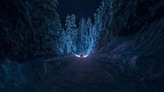 Driving Through The Snowy Forest HD Aesthetic Wallpaper Free ...