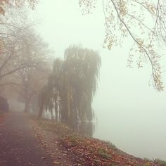 aasee <3 autumn, Münster - Germany