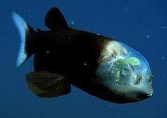 Resultado de imagen para criaturas en 12 kilòmetros de profundidad
